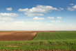 young green wheat and plowed field landscape spring season