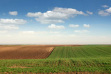 young green wheat and plowed field landscape spring season - 187292859