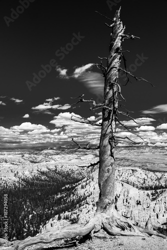 niezywy-drzewo-w-bryka-jaru-park-narodowy-monochromu
