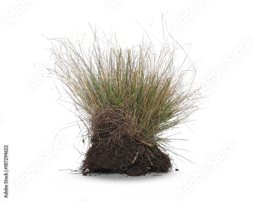 Foto op Plexiglas Gras Grass with dirt, isolated on white background