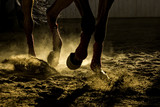 Detail of a horse training inside a horseback riding school in Romania, detail with dust and backlight - 187298298