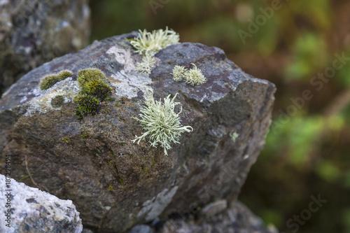 Nahaufnahme von Flechten und Tillandsie auf einem Stein - 187298494