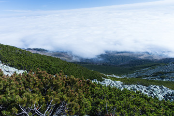 Green mountain forest landscape. Mountain forest in clouds landscape.
