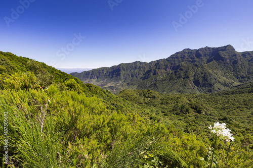 A white flower at the Mirador Numeada viewpoint in the mountains of Madeira in Portugal. - 187305692