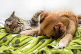 Dog and cat playing together - 187315250