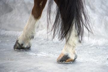 horse hoof on snow detail
