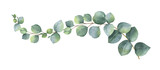 Watercolor vector wreath with green eucalyptus leaves and branches. - 187321221