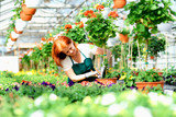 Woman working in a nursery - Greenhouse with colourful flowers - 187329898