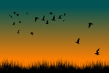 Field of grass and silhouettes of flying birds at sunrise - 187333011
