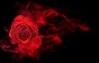 rose wrapped in red smoke swirl on black background