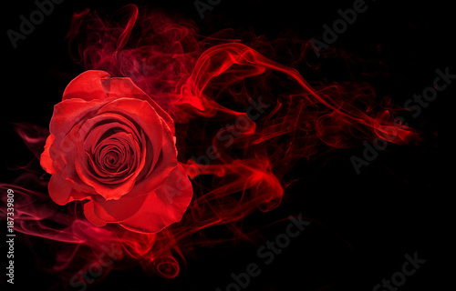 rose wrapped in red smoke swirl on black background - 187339809