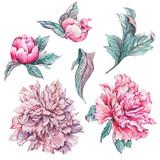 Set of vintage watercolor flowers peonies - 187350027