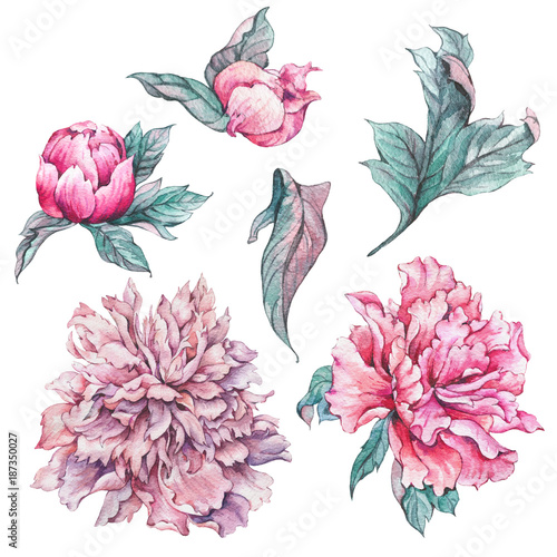 Set of vintage watercolor flowers peonies - 187350027