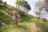 donkey - 187351078