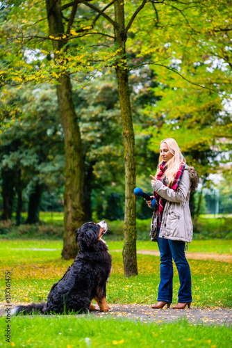 Fototapeta Girl in autumn park training her dog in obedience giving the sit command