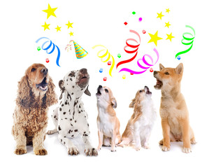 dogs howling for birthday