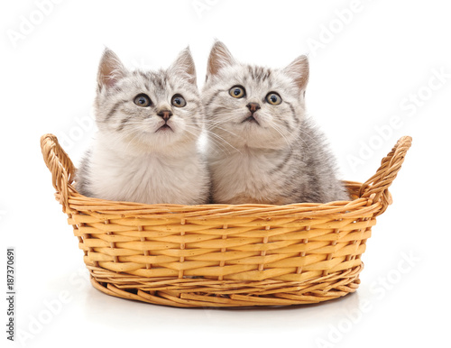 Foto Murales Two cats in a basket.