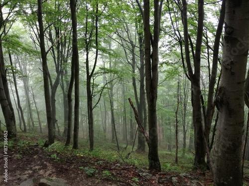 Road in forest Drzewa idące w dół