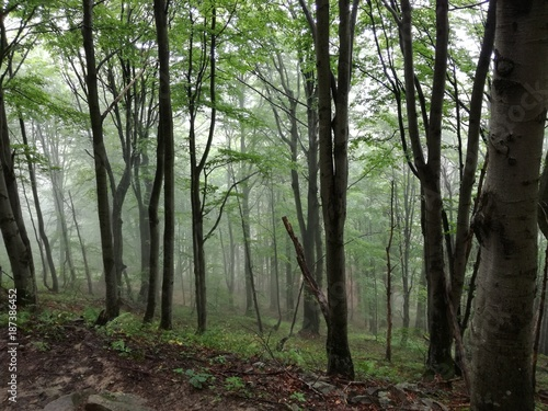 Foto op Plexiglas Weg in bos Drzewa idące w dół