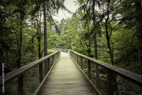 bridge, forest - 187394498