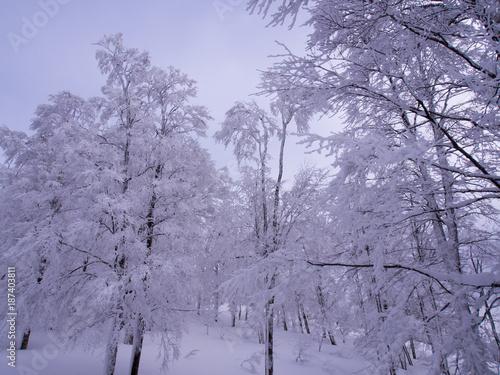 Poster Lavendel 冬の秋田県
