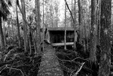 Abandoned Swamp Shack - 187408063