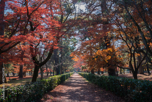 Fotobehang Kyoto 京都御苑の紅葉