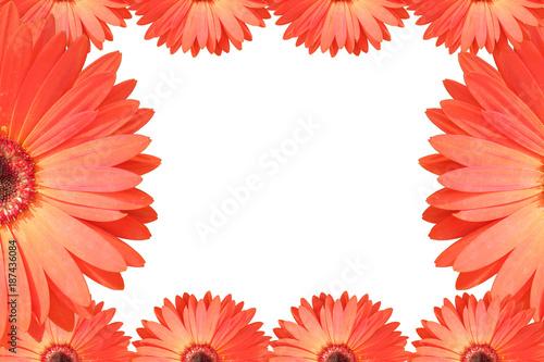 Fotobehang Gerbera berbera flower background