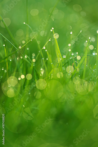 spring grass background. bright green grass with water drops. natural backgrounds with green grass in a cool tone - 187438820