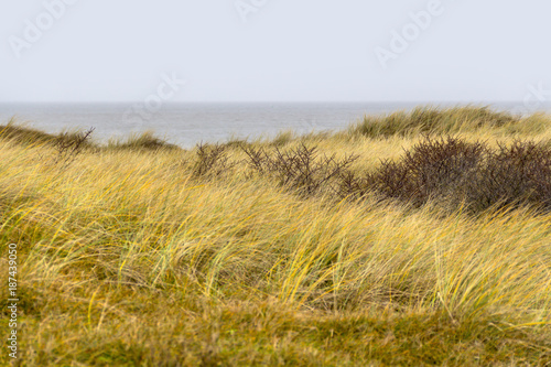 Foto op Plexiglas Noordzee coastal dune scenery
