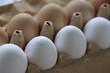 Weiße und braune Hühner Eier im Karton