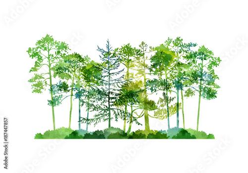 akwarela-krajobraz-z-drzewami