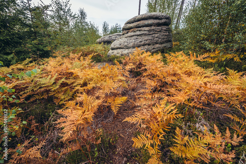 Rock fomartion and autumnal ferns in Broumov Walls mountain range in Czech Repub Poster