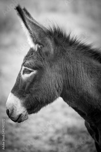Esel © Sonja