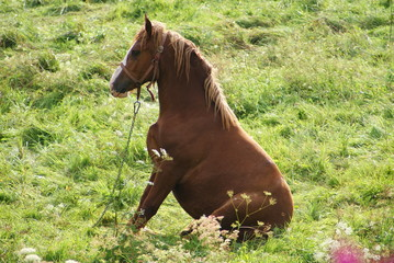 Zabawny siędzący koń