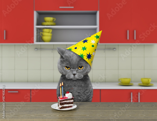 Funny cat waiting to eat chocolate cake - 187458276