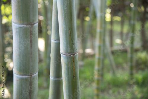 Aluminium Bamboe 花イメージ