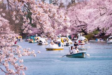 井の頭恩賜公園の桜