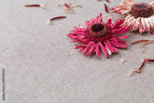 Fotobehang Gerbera Red dried flower petals and flowers are laid out on a light cotton cloth.