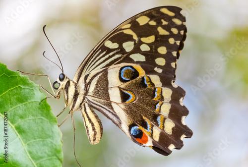 papillon sur fond flou  - 187472047
