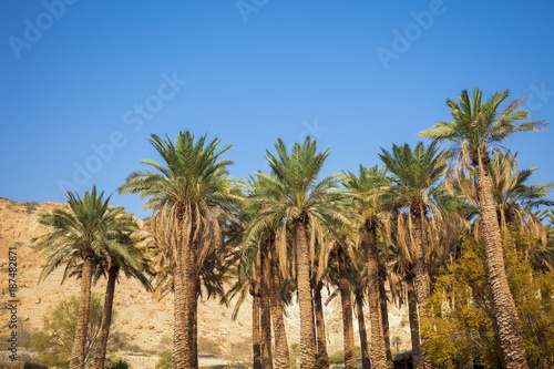 Foto Murales Oasis in desert. Palm trees against mountain