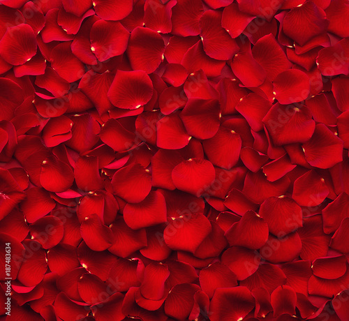 Background of red rose petals - 187483634
