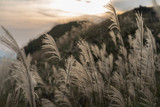 Reed grass fields with mountain on background at sunset - 187486084
