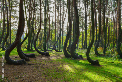 a-weird-curious-forest-in-poland