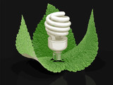 Energy Saving Light Bulb and leaves. Image with clipping path
