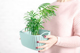 growing domesticated plants, a woman holds a plastic container with a green house plant - 187492651