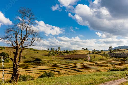 Papiers peints Miel cultivated land fields landscaped near Kalaw Shan state in Myanmar (Burma)