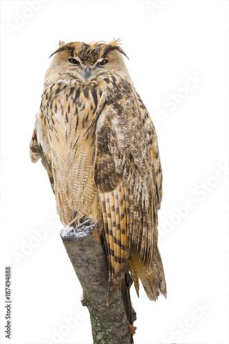 Fotobehang Natuur owl
