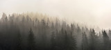 Pine Forests. Misty morning view in wet mountain area. - 187495692