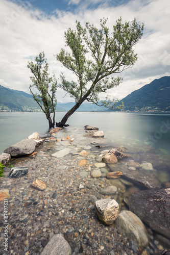 Staande foto Grijs Un arbre dans le Lac Majeur depuis Locarno